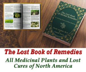 the lost book of remedies download