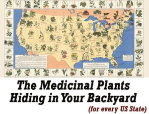 the medicinal plants in your backyard