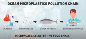 microplastics enter the food chain