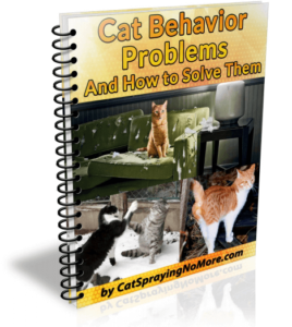cat behavior problems and how to solve them